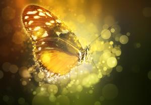 butterfly_300w